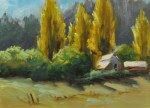 Crozier Poplars