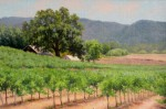Figone Paso Robles Vineyard
