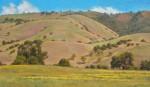 Figone Rolling Hills Evergreen