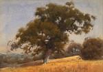Percy Gray Hillside Oak