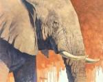 Kratter Elephant Portrait