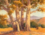 Paul Kratter Sycamore Stand Morning Light