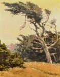 Lindenberg Bodega Cypress