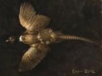 sERGIO Lopez Study Of A Pheasant