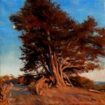 Lopez sunset Cypress_rs