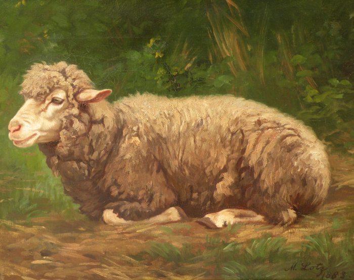 Matilda Lotz - sheeps rest