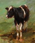Kyle Paliotto - Coy Cow