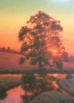 Sauve Backlit Oak, Crimson Glow