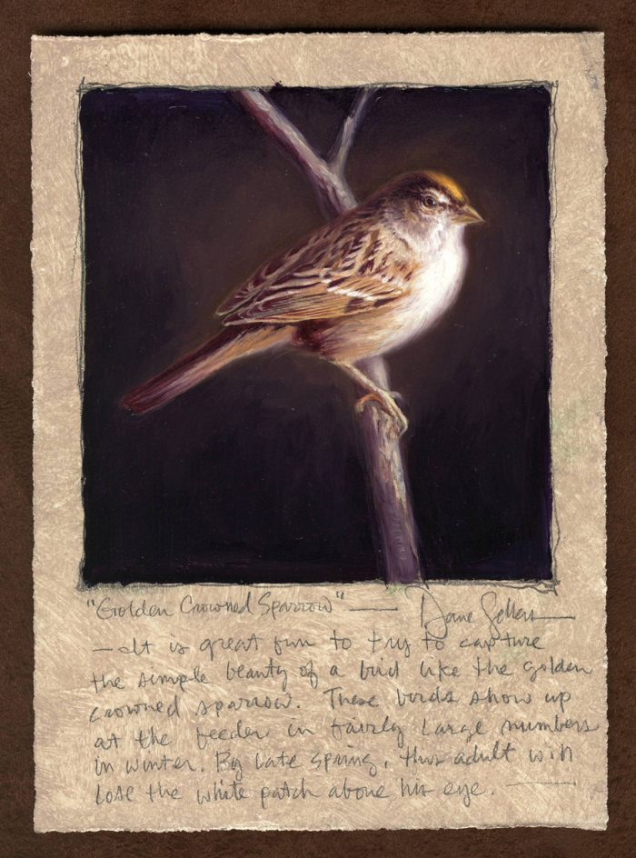 Dave Sellers - Golden Crowned Sparrow