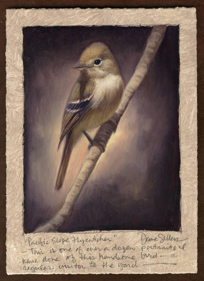 Dave Sellers - Pacific Slope Flycatcher
