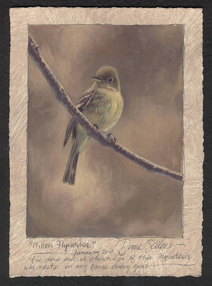 Dave Sellers - Willow Flycatcher