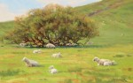 Bart Walker Marin County Pastoral