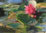 Callens Lilies