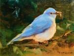 Callens Spring Mountain Bluebird