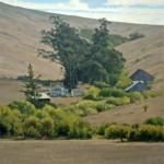 Allen Figone - Bodega Highway Ranch