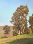 Figone California Eucalyptus A