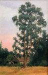 Figone Eucalyptus at Sunset