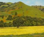Figone Evergreen Hills 3 Wildflowers