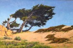 Figone Pacific Grove Cypress
