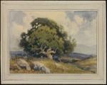 Percy Gray Old Oak on a Hillside