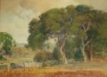 Percy Gray Poppies Under Oaks