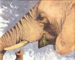 Kratter Elephant Grazing