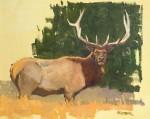 Kratter Encounter Study Elk