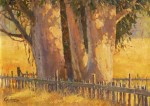 Kratter Eucalyptus Stand