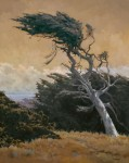 Lindenberg Bodega Head Cypress Large