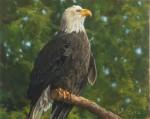 Lopez Bald Eagle