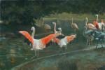 Lopez Flamingo Pond