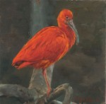 Lopez Scarlet Ibis