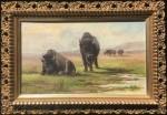 Meyer Straus Plains Buffalo