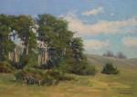 Walker Coastal Cypress