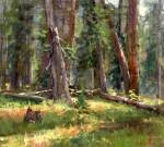 Walker Forest Interior