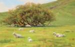 Bart Walker Marin County Pastoral