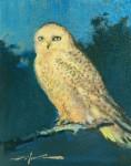 Wood Night Owl, Snowy Owl