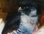 Michael Wood - hawk Eye